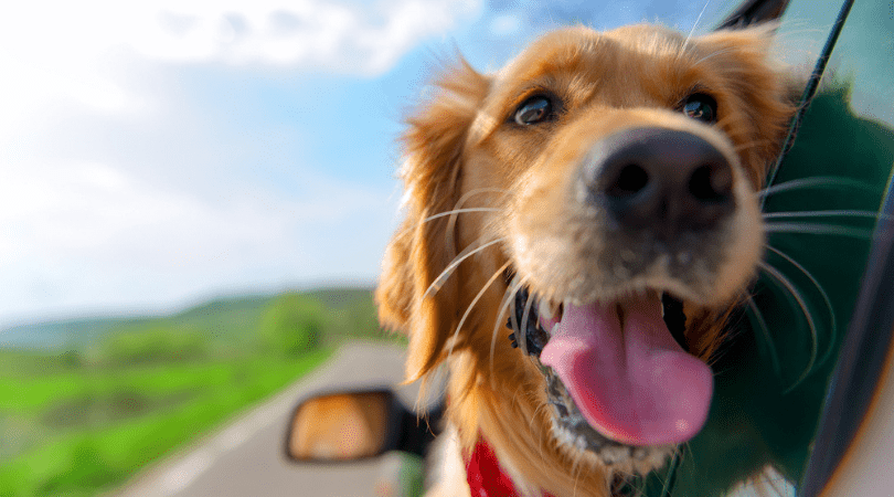 Is CBD Oil Safe for Dogs